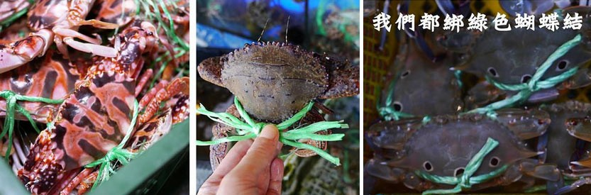 All live Wanli Crab are tied-up with a neon-green cord representing they are the catches of Wanli crab-fishermen.
