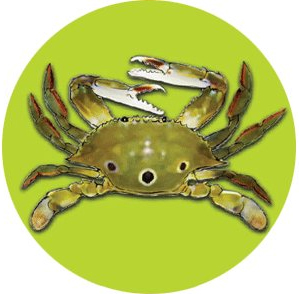 3-Spot Crab (Portunus sanguinolentus、red-spotted swimming crab)